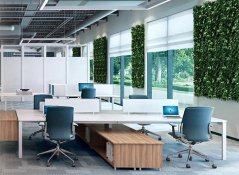 深圳办公室设计|不同的办公室需要什么绿植?