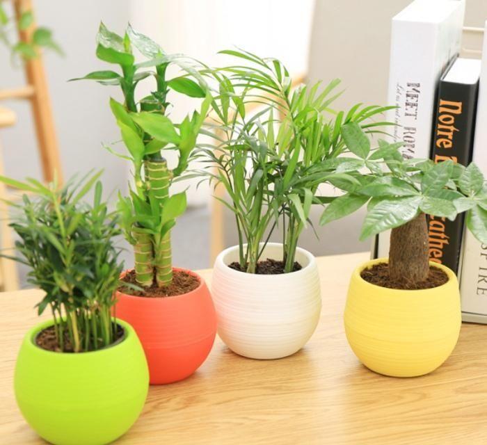广州办公室设计|为什么每个公司都会有一两盆绿色植物?